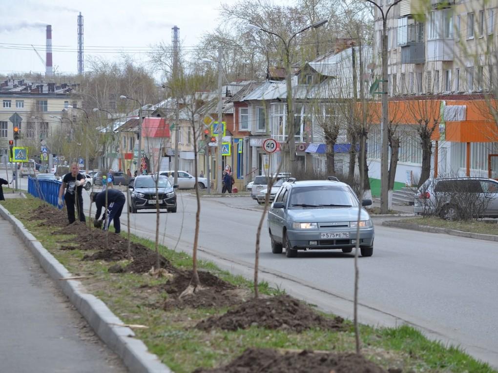 4 мая на центральной улице Красноуральска высадили 35 саженцев шаровидной ивы – от Больничного городка до детсада №18.