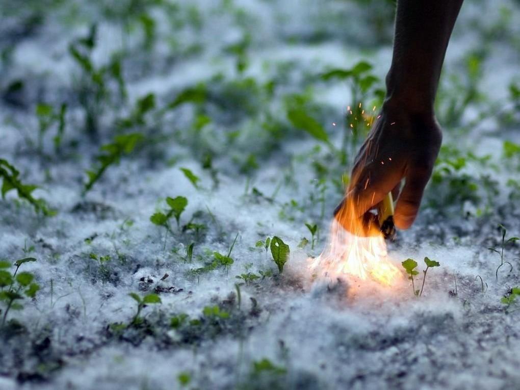 За прошедшие сутки в Свердловской области потушили почти 250 пожаров и возгораний, 184 из них были связаны с поджогами тополиного пуха.